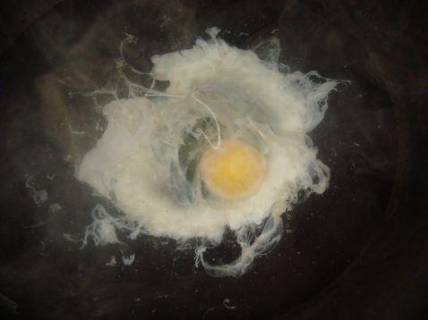 酒酿甜蛋的做法图解