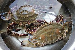 干锅香芹麻辣蟹的做法图解