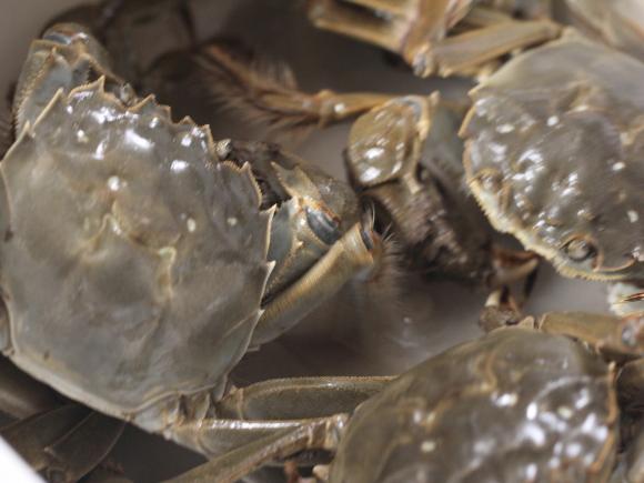 烩河蟹的做法大全